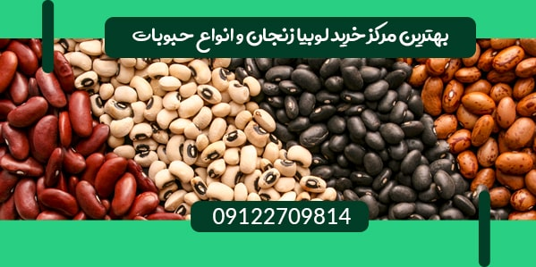 مرکز خرید لوبیا زنجان
