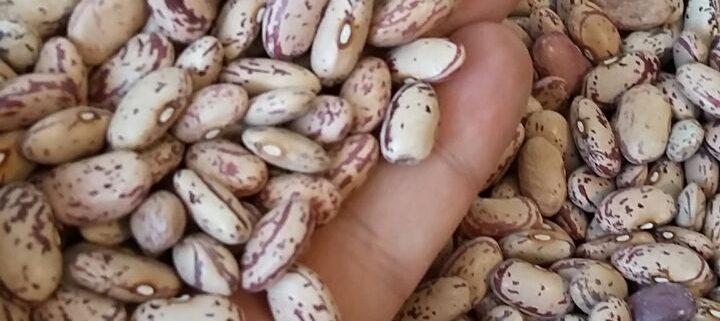 قیمت لوبیا چیتی