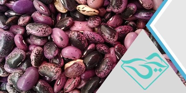 تولید بهترین کیفیت لوبیا در خمین