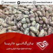 قیمت لوبیا چیتی ازبک