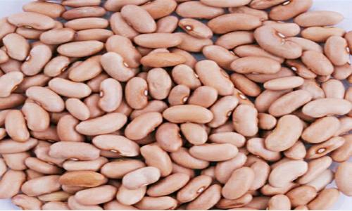 خرید عمده انواع لوبیا کشاورزی