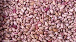 قیمت روز بازار لوبیا چیتی