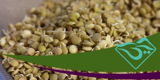 استعلام قیمت حبوبات در بازار مولوی