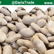 صادرات انواع لوبیا