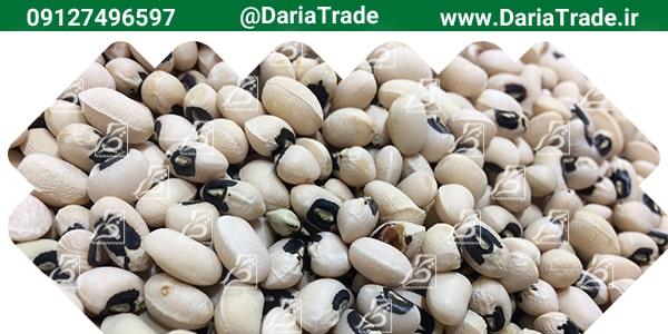 صادرات انواع لوبیا به روسیه