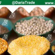 صادرات مستقیم حبوبات