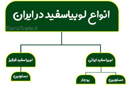 فروش لوبیا سفید ایرانی